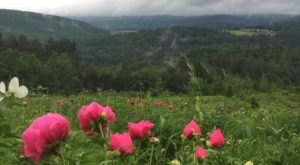You'll Want To Visit This Luscious Peony Farm In Vermont Before Summer Is Over