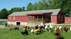 The Small Town Petting Zoo In New Hampshire That's Worthy Of A Road Trip