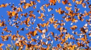 The Butterfly Release Near Pittsburgh That Will Add A Touch Of Magic To Your Summer