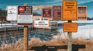 More Than 700 Minnesota Lakes Are Being Taken Over By Aquatic Invaders