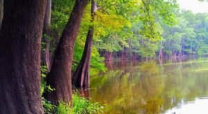 This Singing River In Mississippi Needs To Be Experienced To Be Believed