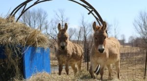 The Small Town Petting Zoo In Iowa That's Worthy Of A Road Trip