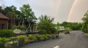 The Garden Cafe In Kentucky Where You Can Dine Amidst The Flowers