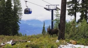 This Gondola Dinner Ride In Idaho Is A Summer Experience You'll Never Forget