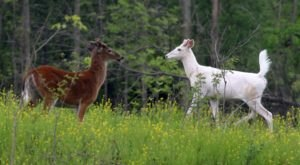 The One-Of-A-Kind White Deer Experience In New York That's Nothing Short Of Magical