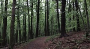 This 2.3-Mile Hike In Pennsylvania Takes You Through An Enchanting Forest