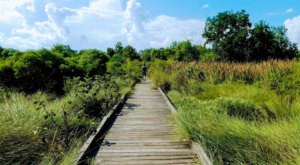 The Boardwalk Hike Near New Orleans That Leads To Incredibly Scenic Views