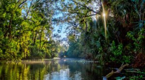 The 51-Mile Paddling Trail In Florida Is A Scenic Adventure You Have To See To Believe