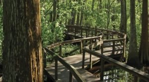 The Beautiful Bridge Hike In Louisiana That Will Completely Mesmerize You