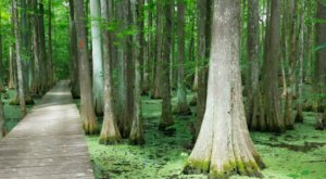 The Largest State Park In Louisiana Is Also Home To A Beautiful Boardwalk Trail