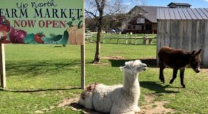 There's A Petting Zoo At This Michigan Market And You'll Want To Visit For Yourself
