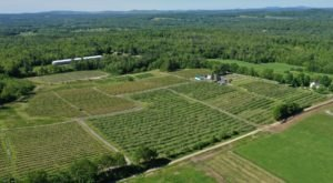 You Can Pick The Most Delicious Berries All Summer Long At This Maine Orchard