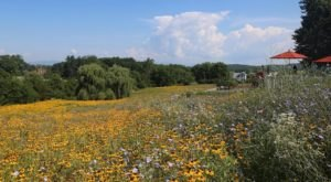 This Breathtaking Mountain Winery In Virginia Is Completely Surrounded By Wildflowers