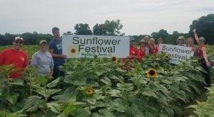 This Upcoming Sunflower Festival In Minnesota Will Make Your Summer Complete