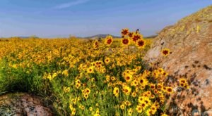 This Oklahoma Trail Is Brimming With Wildflowers And Now Is The Best Time To Hike It