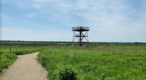 The Observation Tower At This 3,000-Acre Park Will Show You Illinois Like Never Before
