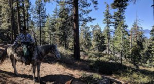 This Guided Horseback Trail Around A Nevada Lake Is The Scenic Adventure You Crave