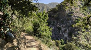 This 3.5-Mile Hike In Southern California Takes You Through An Enchanting Forest