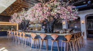Dine Under An Enchanting Cherry Blossom Tree At This Magical Southern California Eatery