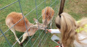 The Small Town Petting Zoo In Michigan That's Worthy Of A Road Trip