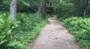 This 3-Mile Hike In Virginia Takes You Through An Enchanting Forest