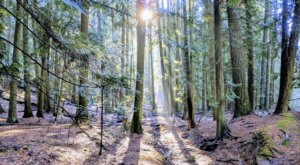 Hike Into A Hidden Grove Of Cedar Trees In Idaho For The Natural Escape You Need