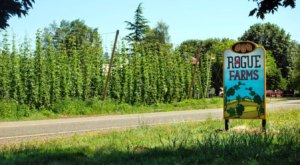 Visit This Oregon Farm And Pub Where The Hops Are Grown Right Outside The Door