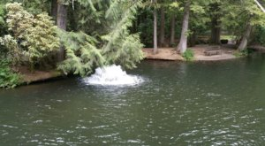 The Pretty Pond In Oregon Where You're Guaranteed To Catch A Trout