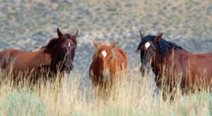 The Wild Horse Tour That Shows Off The True Beauty Of Wyoming