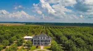 Surround Yourself In 5,000 Pecan Trees At This Charming Arkansas Plantation
