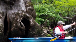 Most People Don't Know Some Of The Oldest Trees In The World Are Found In North Carolina