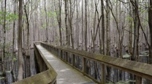 Step Back Into History Along This Tiny Boardwalk Trail In Arkansas