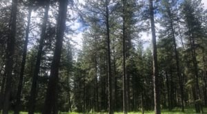 This 3-Mile Hike In Idaho Takes You Through An Enchanting Forest