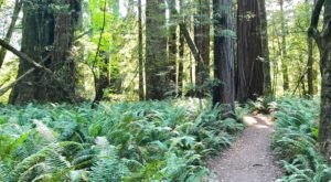 This 3-Mile Hike In Northern California Takes You Through An Enchanting Forest