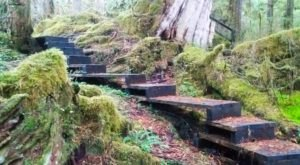 Take This Easy Little Hobbit's Trail To A Secret Waterfall