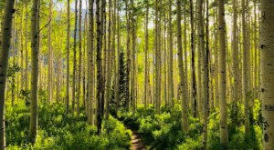 This 2-Mile Hike In Utah Takes You Through An Enchanting Forest
