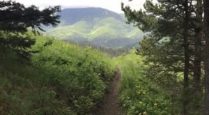 This Montana Campground Trail Is Brimming With Wildflowers And Now Is The Best Time To Hike It