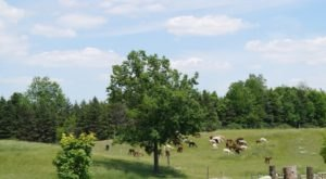 Your Family Will Love The Farm Tours At This Charming Alpaca Farm In New York