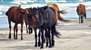 The Wild Horse Tour That Shows Off The True Beauty Of North Carolina