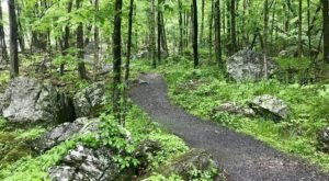 This 3-Mile Hike In West Virginia Takes You Through An Enchanting Forest