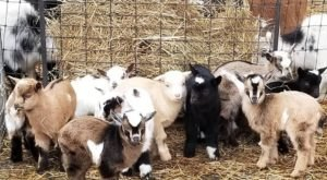 The Small Town Petting Zoo In Georgia That's Worthy Of A Road Trip