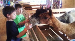 The Small Town Petting Zoo In Alabama That's Worthy Of A Road Trip