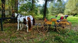 Take A Carriage Ride Through The Mountains For A Truly Unique Georgia Experience