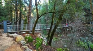 This Suspension Bridge Hike In Northern California Leads You Into A Natural Wonderland