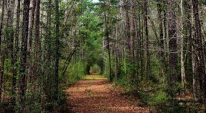 Get Lost In This Enchanting Texas Forest That's One Of The Largest In America
