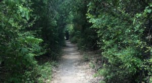 Take This Easy Hike Though A Magical Tunnel Of Trees In Texas