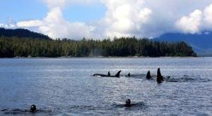 Snorkel With Killer Whales In This Unbelievable Underwater Adventure In Alaska