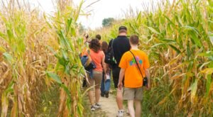 Get Lost In These 9 Awesome Corn Mazes In Ohio This Fall