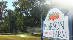 Pearson Farm In Georgia Has Been Growing Sweet Fruits For Over 130 Years