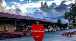 Northern California's Boa Vista Orchards Has 20 Delicious Apple Varieties Prime For The Picking